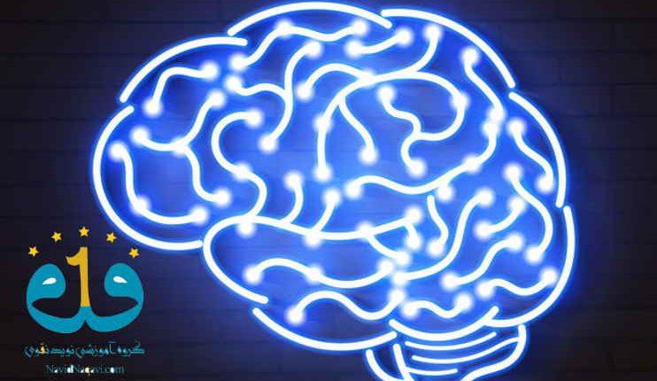 سیستم شبکه ای مغز